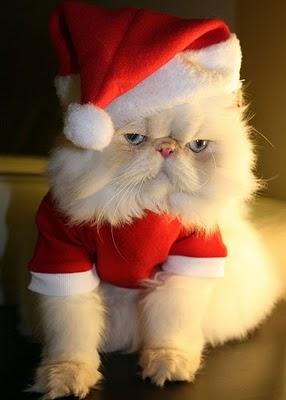 christmas cat4