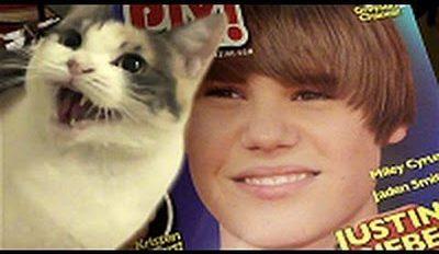 des chats qui detestent justin bieber4