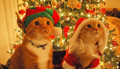 cats dressed as santa elf 02 600x3994