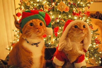 cats dressed as santa elf 02 600x3994